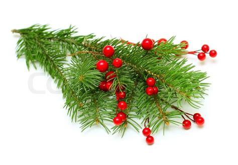 Weihnachtsdeko Fenster Zweig by Weihnachten Gr 252 Nen Zweig Mit Roten Beeren Isoliert