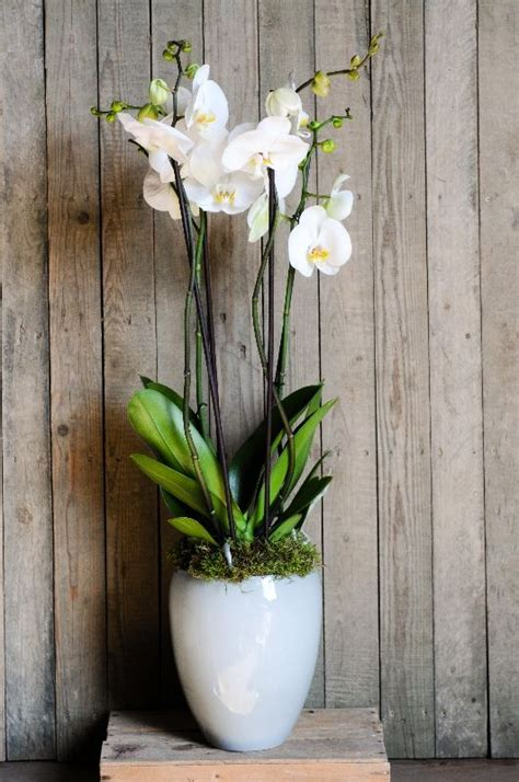 most difficult plants to grow 25 best ideas about orchid pot on pinterest orchids