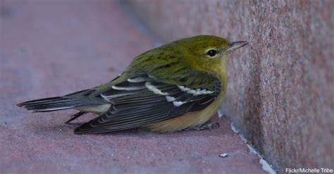 how to care for an injured bird until help arrives the