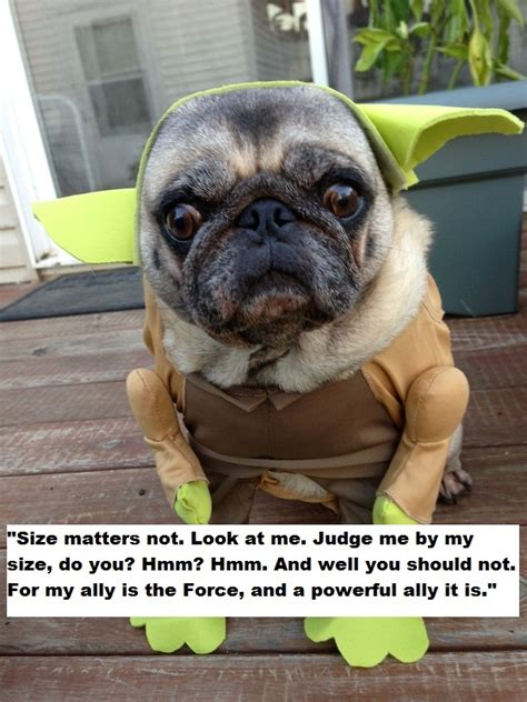 pug slogans pug quotes pugs things that make me smile pug and quotes
