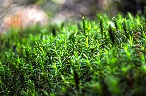 images forest lawn leaf flower moss green