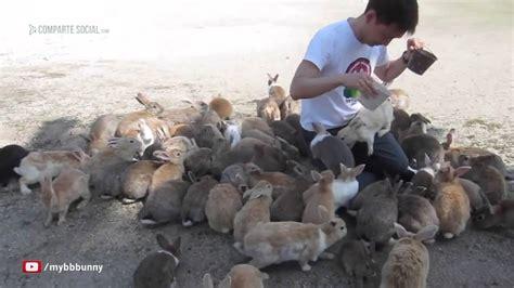 la isla de los 843390583x la isla de los conejos impresionante youtube