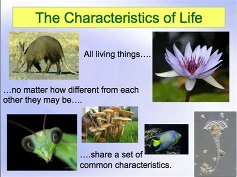 Characteristics Of Biography Ppt | classroom freebies characteristics of life powerpoint