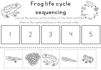 Frog Cycle Worksheet by Pictures Frog Cycle Worksheet Leafsea