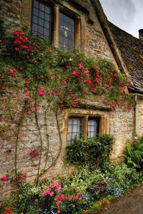 cottage garden plants for sale 25 best ideas about cottages on