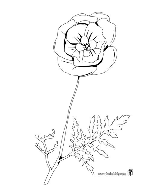 coloring page of a poppy flower poppy coloring pages hellokids com