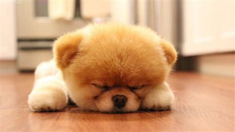 Really Cute Baby Puppys   Wallpapers Gallery