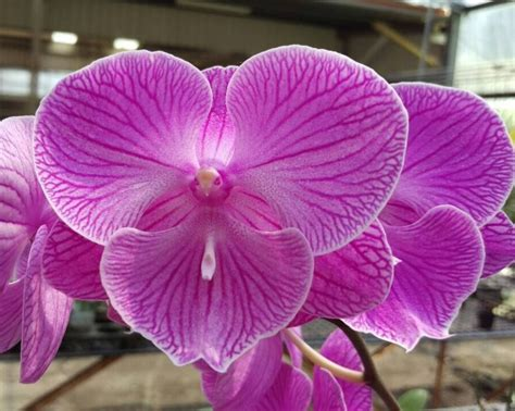 the color orchid new orchid flower colors orchid hub