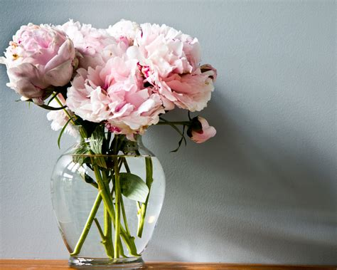 vases design ideas cut flower care adelman peony gardens
