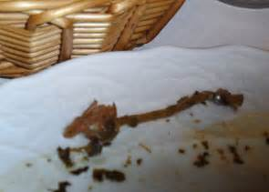 würmer im stuhl bei kindern da ist doch ein wurm im gr 252 nkohl wunstorf myheimat de