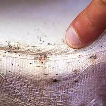How To Get Rid Of Bed Bugs In Clothes Bed Bug Infestation Look For Signs Of Bed Bugs