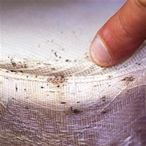 bed bug infestation look for signs of bed bugs