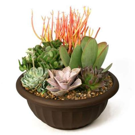 Home Depot Garden Plants by Succulent Garden Plant Your Own Kit 0881011 The Home Depot