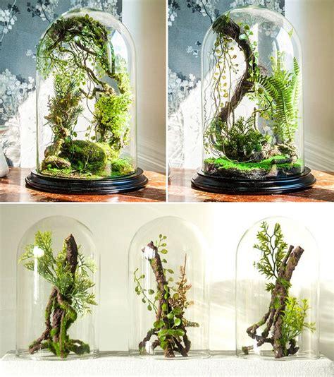 enchanted forest terrarium domes terrarium plants