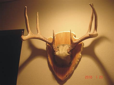 antler plaque template deer antler plaque template