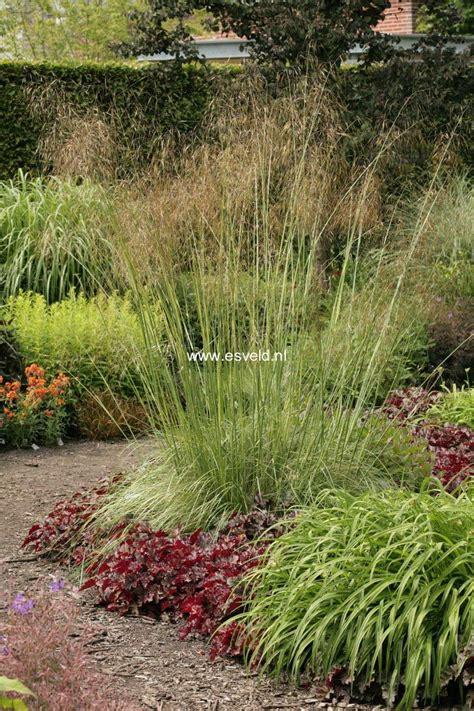 Cheap Garden Flowers Small Garden Flower Ideas Cheap Edging Excerpt Gardening Loversiq Landscape Options Design And