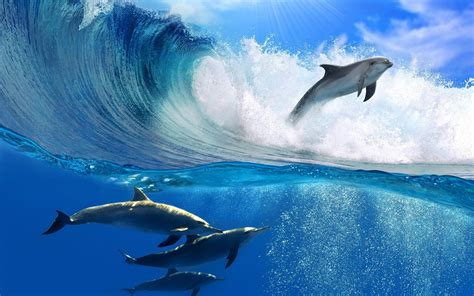 dolphin jumping  wave animal