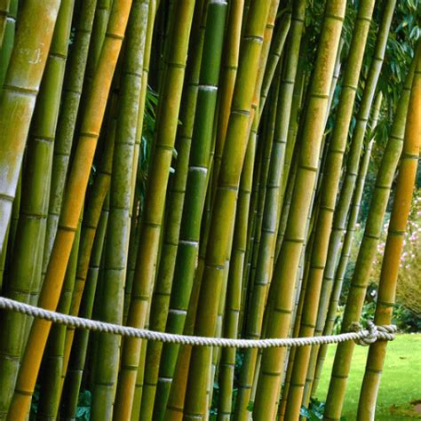 how to get rid of bamboo how to get rid of stuff