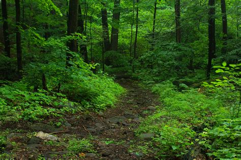 Rainy Summer by Rainy Summer Woods A Hiking Trail On A Rainy Afternoon