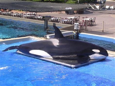 the biggest boat in the whole wide world 15 facts about killer whales always learning