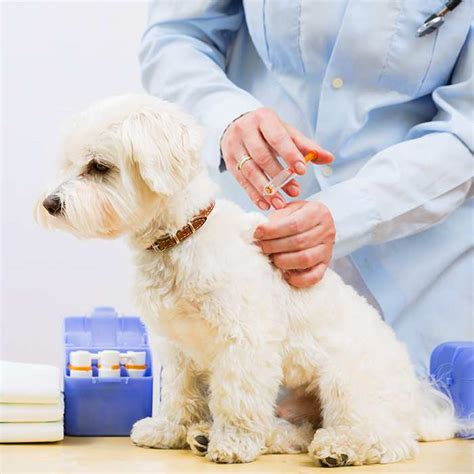 cheap puppy vaccinations puppy vaccination schedule vaccination costs
