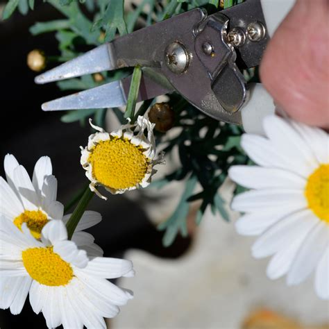 how to cut weeds in backyard weed cut neat ideas