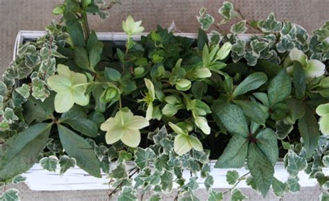 fioriere invernali fioriere invernali fiori e foglie