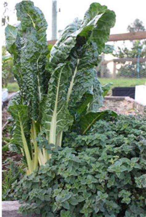 Vegetable Garden Planting Guide Australian Vegetable Gardening