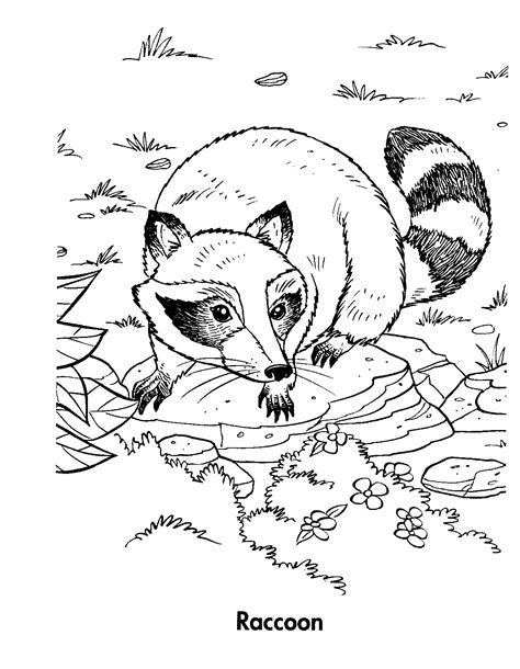 free printable raccoon coloring pages for kids free coloring pages of raccoon dog