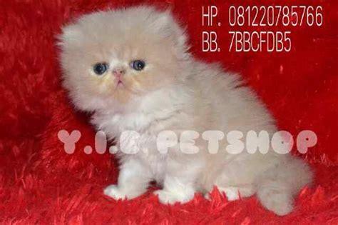 Sho Kucing Di Petshop y i e pet shop yie petshop