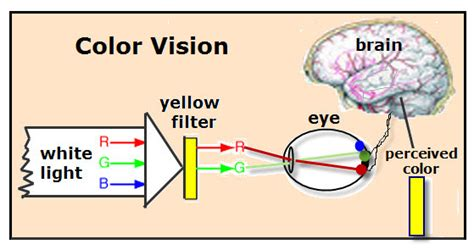 vision color color vision vancleave s science