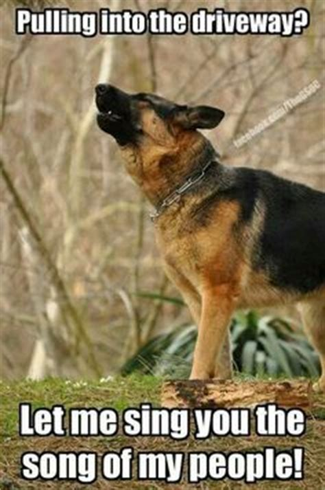 German Shepherd Also Search For German Shepherd Meme For Click Here To Check Out This Hilarious