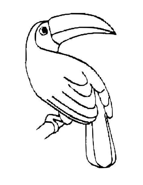 coloring pages of birds in the rainforest toucan outline clipart best