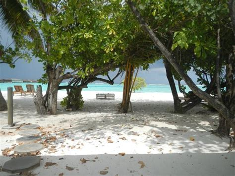 paradise resort maldives superior bungalow superior bungalow when you get out thing you