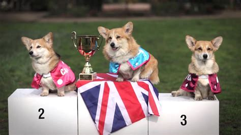 how many corgis does the queen have 100 how many corgis does the queen have corgi the