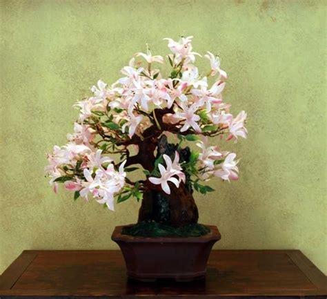 bonsai da interni innaffiare bonsai attrezzi e vasi per bonsai come