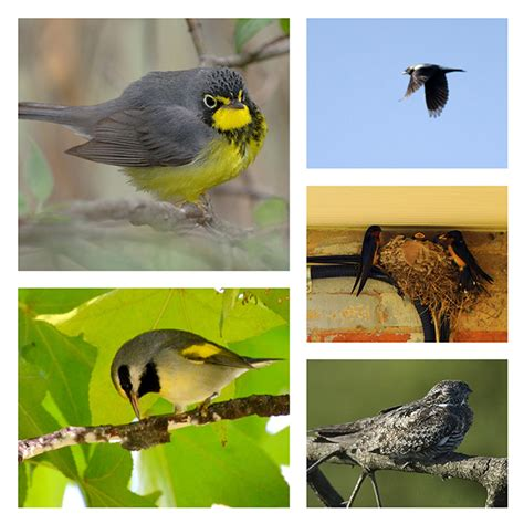 2014 ontario bioblitz bird count gets results royal