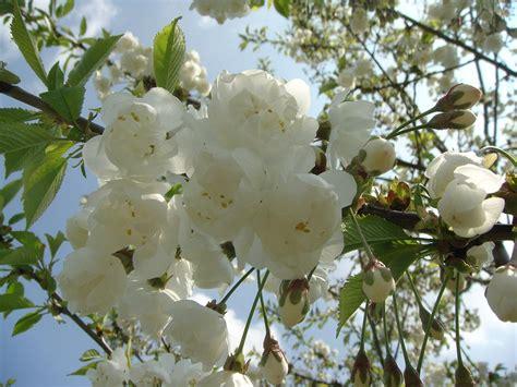 white german flower tree photograph by gonde hoffmann