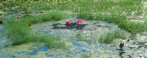 Design A House Jane Marshall Landscape Design Gardens Bridges Fountains