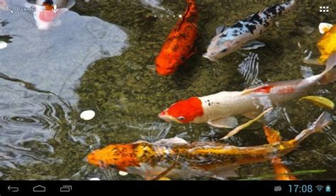 koi free live wallpaper 1 35 apk koi fish live wallpaper wallpapersafari