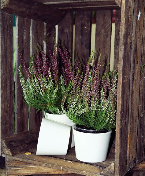 piante per fioriere fioriere con bancali consigli coltivazione e cura