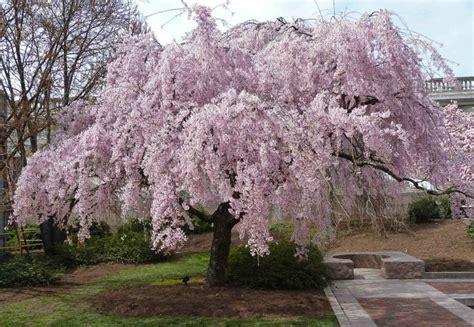 cherry gammon s garden center landscape nursery