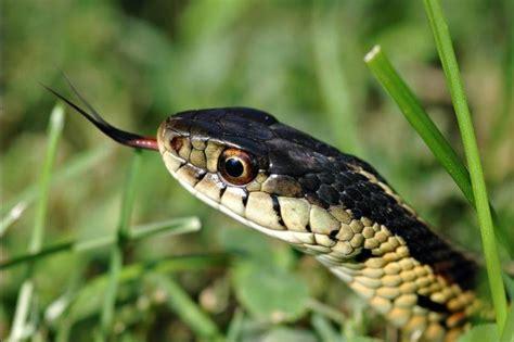 types of garden snakes green garden snakes photos