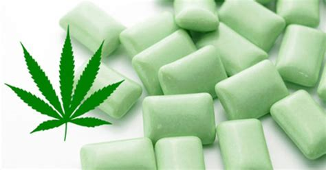 Marijuana Also Search For Marijuana For Fibromyalgia Relief Would You Try This Cannabisgum