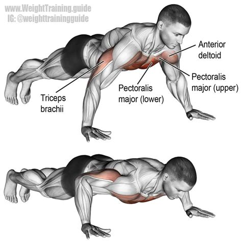 push up bench press 25 best ideas about bench press on pinterest bench