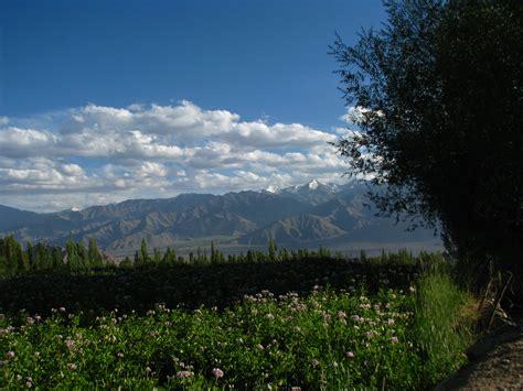 For Outside by File India Ladakh Leh 053 Flower Fields Outside Guesthouse 3844435507 Jpg