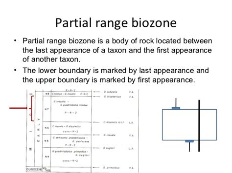 partial biography definition biostratigraphy geologist