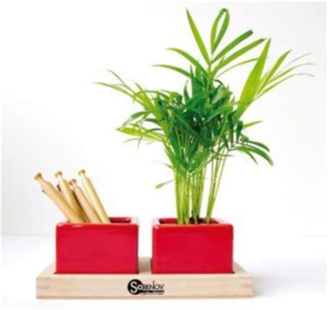 plantes de bureau sans soleil plantes de bureau sans soleil 28 images les 25