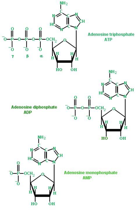 exle of nucleic acid image gallery monomer exles