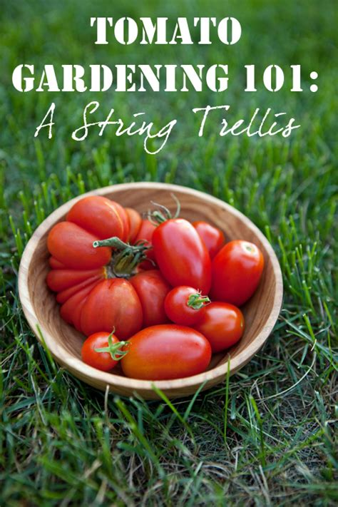 the deckchair gardener 101 cunning strategems for gardening avoidance and sensible advice on your realistic chances of getting away with it books how to build a tomato string trellisrealfarmacy